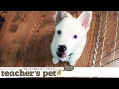 Positive House Training With a Crate | Teacher's Pet With Victoria Stilwell
