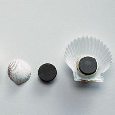 Easy DIY craft: Shell Magnets
