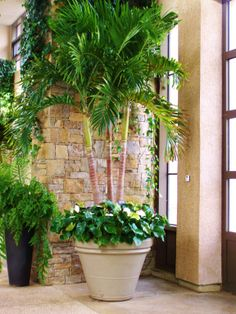 entracing palm tree type house plant. Potted Palm by Amy Anderson 18 Easy Outdoor Room Ideas  Porch and Front porches