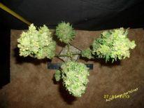 Stone Dragon Day66 27 Jan 2013 - cannabis art from Stunted