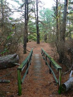 This One Easy Hike in Delaware is Unfortgettable Delaware Usa, Delaware Beach, Mid Atlantic States, Delmarva Peninsula, Bethany Beach, Rehoboth Beach, Day Hike, Beach Fun, Day Trips