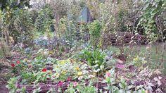 Organsko carstvo: Mješovita sadnja povrća, cvijeća i lijekovitog bilja u organskom vrtu