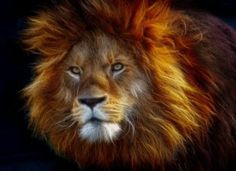 It takes courage to become all you can be. What Is Courage, Lion Art, All You Can, Pet Clothes, Akita, Wildlife Photography, Big Cats, Free Pictures, Beautiful Creatures