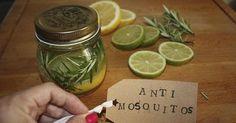 Remedio natural y decorativo contra mosquitos