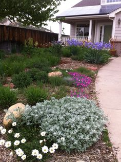 Front Yard Xeriscape Ideas | Gleason completely converted her front yard to Xeriscape using Garden ...