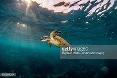 Stock-Foto : Sunray turtle