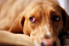 5 Stellar Organic Pet Foods