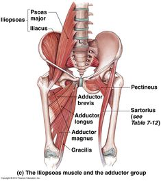 pectoralis major - Google 검색
