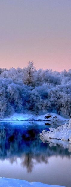 The Frost holds Nature in its Beauty, Captured in millions of tiny ice Crystals, Reflected across the Glassy Pond, the Sky Blankets the Scene in a Soft Pink Embrace