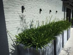 Zinc containers with Agapanthus. Outdoor Rooms, Outdoor Gardens, Outdoor Decor, Bbq House, Simple Garden Designs, Pergola, Agapanthus, Planter Boxes, Pathways
