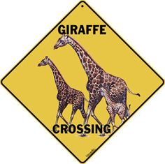 giraffe crossing - Bing Images