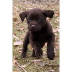 The Daily Puppy | Photo ❤ liked on Polyvore featuring animals, dogs, pets, pictures and backgrounds