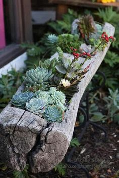 succulents in a log planter.I don't know what I like more, the log planter or the succulents. Succulent Gardening, Cacti And Succulents, Planting Succulents, Container Gardening, Planting Flowers, Garden Planters, Succulent Planters, Succulent Containers, Cheap Planters