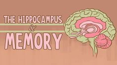 "In the latest TED-Ed animation, ""The Hippocampus and Memory,"" educator Sam Kean and animator Anton Bogaty explore the function of the hippocampus, the region of the brain named after its resemblanc…"