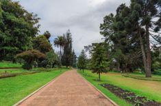 Sri Lanka, Prowincja Środkowa, Miasto Nuwara Eliya, Victoria Park, Park miejski, Drzewa, Alejka Victoria, Sri Lanka, Sidewalk, Side Walkway, Walkway, Walkways, Pavement