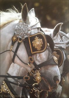 beautiful, i want for my horses when i get my horse drawn hearse