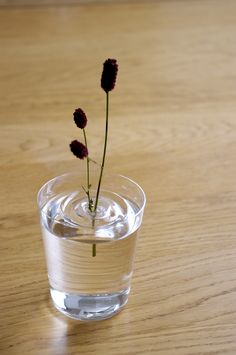 Living in a shoebox A floating and invisible vase from Oodesign | Living in a shoebox