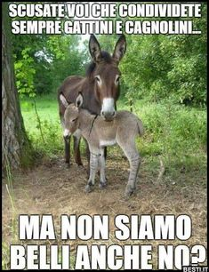 Asina ed Asinello. Animals And Pets, Baby Animals, Funny Animals, Cute Animals, Funny Boy, Funny Cats, Funny Images, Funny Pictures, Italian Humor