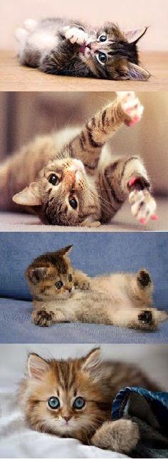 http://look-how-cute-kittens.blogspot.com/