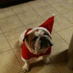 Santa dog!