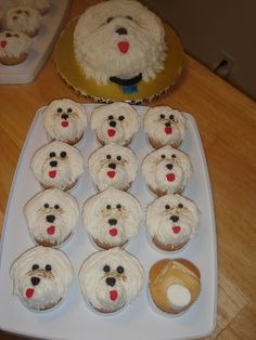 Maltese Birthday Cupcakes Made for my daughters birthday. to look like her maltese doggie. It was his birthday too. Puppy Cupcakes, Puppy Cake, Cupcakes For Boys, Animal Cupcakes, Dog Birthday Gift, Puppy Birthday Parties, Birthday Treats, Birthday Cupcakes, Cupcake Icing