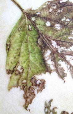 Illustration Botanique, Leaf Illustration, Leaf Drawing, Nature Drawing, Botanical Flowers, Botanical Prints, Watercolor Leaves, Floral Watercolor, Pencil Drawings For Beginners