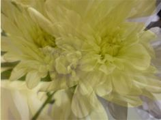 this is another two flower photos which have been layered over each other