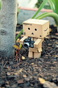 Danbo, doing nature photography. Toys Photography, Nature Photography, Travel Photography, Photography Degree, Photography Hashtags, Photography Classes, Photography Backdrops, Danbo, Cardboard Robot