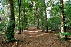Parkachtig Oosterheide, Noord-Brabant