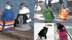 New Zealand's Penguins in Dire Need of Fabulous Knits
