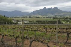 Take a look at this property and discover more about its features, price and location to find out why it caught my eye.  Stellenbosch Wine Land