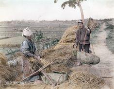 脱穀 1890年代