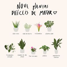 Plants that is hard to kill