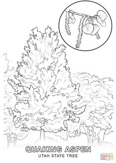 OUTLINE :: DRAWING :: LINE DRAWING :: PAINTING