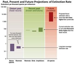 Diagram showing three columns: left shows the historic rate of extinctions that is between 0.1 and 1 species per thousand species per millenium, middle shows the current rate at around 100, right shows future predictions between 1,000 and 10,000.