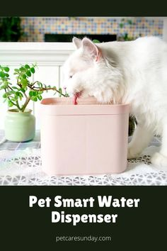 Have you noticed your pet drinking a lot when the water is fresh, but totally ignoring water that's been there for hours? Some pets—especially cats—hate the taste of stagnant water. Our pet smart water dispenser will solve this issue. This smart device inspires your pet to drink more water, keeping her safe and hydrated. #petwaterdispenser #petwaterdispenserdiy #petwaterdispenserideas #petwaterdispenserdesign #automaticpetwaterdispenser #diypetwaterdispenser #automaticpetwaterdispense Pet Water Fountain, Drink More Water, Water Spray, Water Dispenser, Smart Water, Diy Stuffed Animals, Water Tank, Drinking, Hate