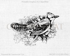 SHABBY CHIC BIRD Clipart Commercial Use Ok Vintage by ClipArtBrat