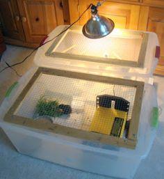 Fresh Eggs Daily: DIY Duplex Brooder Box