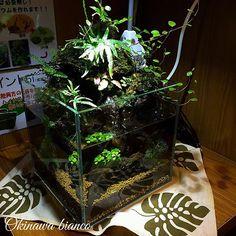 【okinawabianco3014】さんのInstagramをピンしています。 《こんばんは! 20㎝キューブでアクアテラリウムを 作成しました! 緑を手軽に楽しめ、 アクアの要素もありダブルで 癒されますよー! 気になった方は是非 ビアンコでチャレンジして見てくださいね♪ #沖縄#アクアリウム#アクアテラリウム#水草#水草レイアウト》