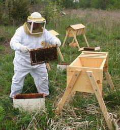 Installing the bees in a top bar hive WE will be installing a top bar hive this spring at http://www.originshobbyfarm.com/