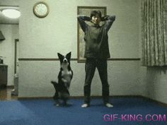 Funny Dog Doing Squats With Owner