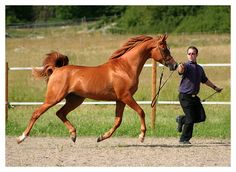 """""""Kirkow"""" - photo by LovLus, via deviantART;  Arabian colt   ...This looks like that brief moment in a horse's gait that all four hooves are off the ground..."""