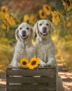 Golden Life, Mundo Animal, Labrador Retriever, Instagram, Dogs, Animals, First Aid Course, Labrador Retrievers, Animales