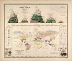 Botanical zoom Botanical Geography - HistoryShots InfoArt