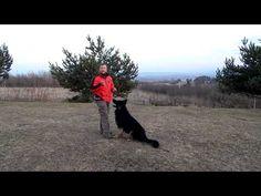 Výcvik psov - Ako na to - privolanie Pets, Youtube, Youtubers, Youtube Movies, Animals And Pets