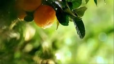 Farm fresh fruit juices everlasting energy  Maritto Farms
