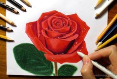pencil drawing techniques rose color pencil drawing - Rose Drawing and Paintings: In the earlier post we have shown you some beautiful Flower drawings, now in this post we have included some 25 Beautiful Rose drawings and paintings for your inspiration Beautiful Rose Drawing, Realistic Flower Drawing, Rose Drawing Simple, Simple Rose, Drawing Flowers, Easy Rose, Realistic Drawings, Beautiful Drawings, Pencil Drawing Tutorials