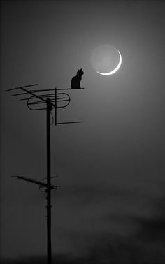 Le chat parle à la lune / The cat speaks to the moon. Crazy Cat Lady, Crazy Cats, Beautiful Moon, Beautiful Things, Tier Fotos, Here Kitty Kitty, Nocturne, Stars And Moon, I Love Cats