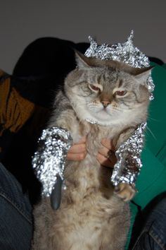 """""""The new pokemon just look like cats with tinfoil and lasers on them."""""""