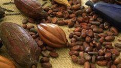 Chocolaterie de Puyricard, l'excellence gourmande